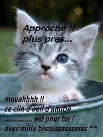 image drole de chat avec texte